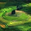 vietnam-terraces